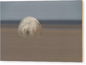 Sun Sea And Sand Wood Print