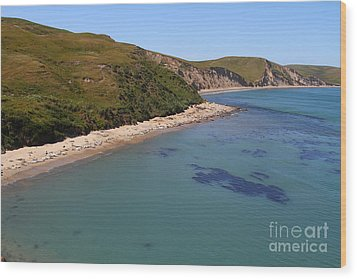 Sunbathing Elephant Seals Along A Beach At Point Reyes California . 7d16058 Wood Print by Wingsdomain Art and Photography