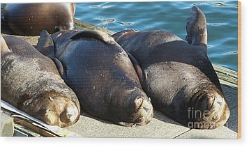 Wood Print featuring the photograph Sunbathing Sea Lions by Chalet Roome-Rigdon