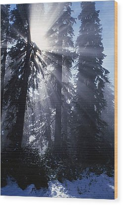 Sunbeams Through Pine Trees Wood Print by Natural Selection Craig Tuttle