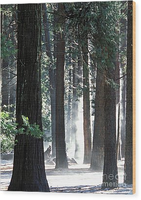 Sunbeams Through The Trees Yosemite National Park Color Wood Print by Nature Scapes Fine Art