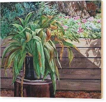 Sunburnt Kaffir Lily Wood Print by Peter Sit
