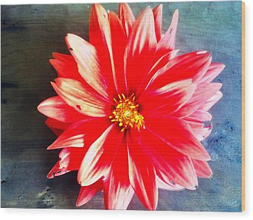 Wood Print featuring the photograph Sunburst by Janice Spivey