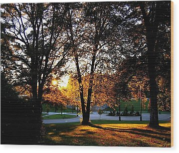 Sundown In Stanley Park Wood Print by Will Borden