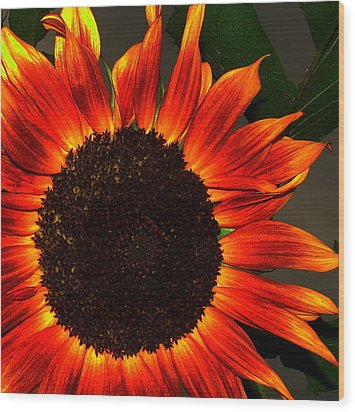 Wood Print featuring the photograph Sunfire by Ramona Johnston