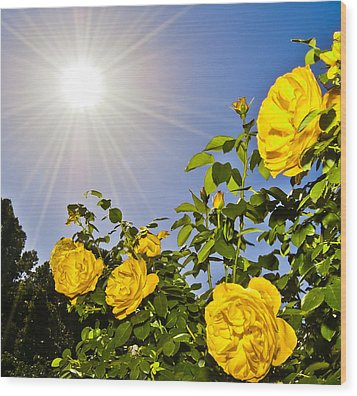 Sunflare And Yellow Roses Wood Print by Amber Flowers
