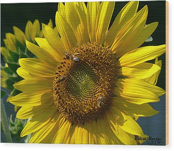 Sunflower 4 Wood Print by EricaMaxine  Price