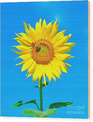 Sunflower And Bee Wood Print by Debbi Granruth