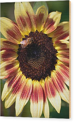 Wood Print featuring the photograph Sunflower by Anna Rumiantseva