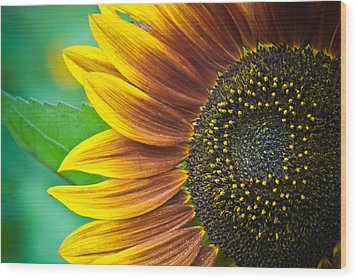 Sunflower Beauty Wood Print