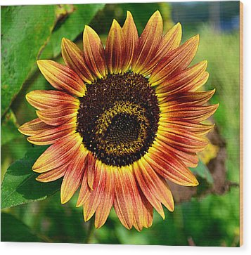 Wood Print featuring the photograph Sunflower by Brian Hughes