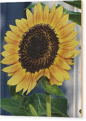 Sunflower Wood Print by Bruce Bley