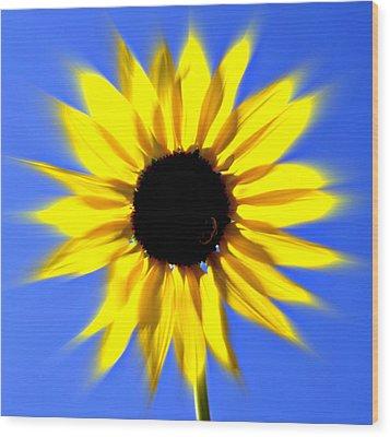 Sunflower Burst Wood Print by Marty Koch
