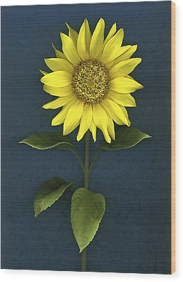 Sunflower Wood Print by Deddeda
