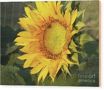 Wood Print featuring the digital art Sunflower Digital Art by Deniece Platt