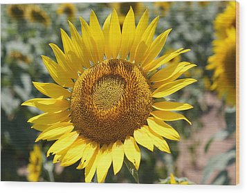 Wood Print featuring the photograph Sunflower by Donna  Smith