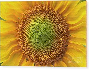 Sunflower Fantasy Wood Print