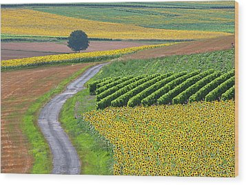 Sunflower Field And Road Wood Print by Peter Smith Images