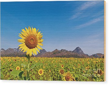Sunflower Field  Wood Print by Tosporn Preede