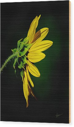 Wood Print featuring the photograph Sunflower In Profile by Vicki Pelham