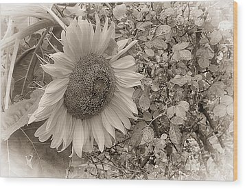 Wood Print featuring the photograph Sunflower In Sepia by Vicki DeVico