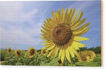 Sunflower In Summer Bloom Wood Print by Moonie's World