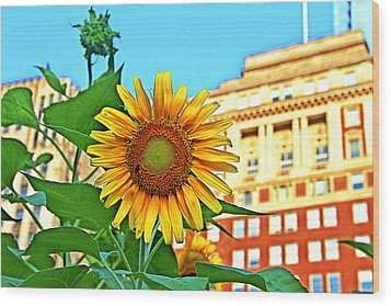 Wood Print featuring the photograph Sunflower In The City by Alice Gipson