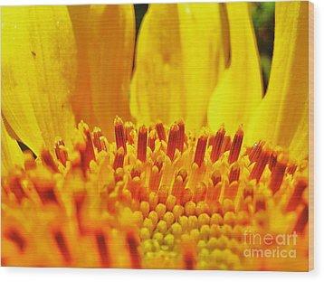 Sunflower Wood Print by John King