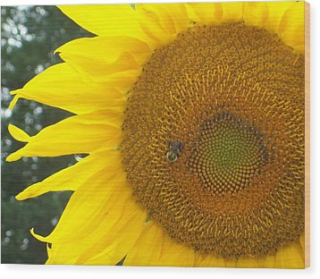 Wood Print featuring the photograph Sunflower by Lou Ann Bagnall