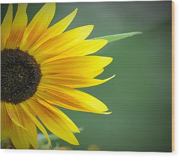 Sunflower Morning Wood Print by Bill Cannon