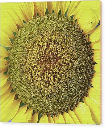 Sunflower Wood Print by Nenov