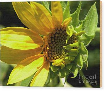 Sunflower No. 1 Wood Print by Christine Belt