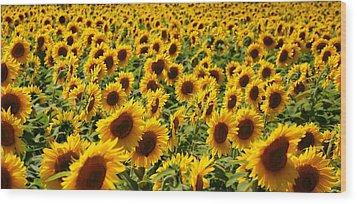 Wood Print featuring the photograph Sunflower Panorama by Nancy De Flon