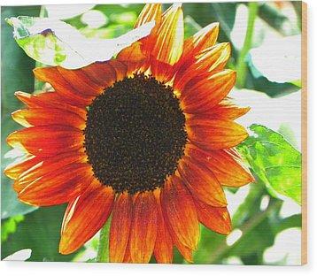 Sunflower Wood Print by Rhiannon Hamm