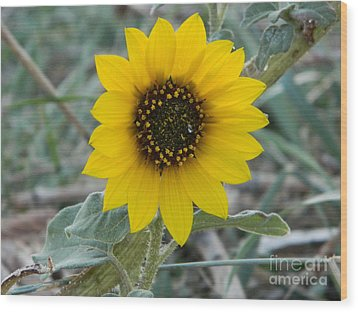 Sunflower Smile Wood Print by Sara  Mayer