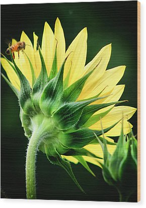 Sunflower With Bee Wood Print by Lynne Jenkins
