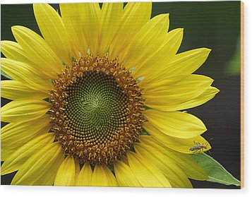 Wood Print featuring the photograph Sunflower With Insect by Daniel Reed