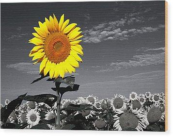 Sunflowers 1 Wood Print by Sumit Mehndiratta