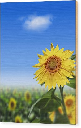 Sunflowers, Artwork Wood Print by Victor Habbick Visions