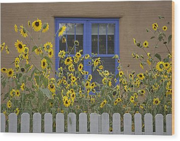 Sunflowers Bloom In A Garden Wood Print by Ralph Lee Hopkins