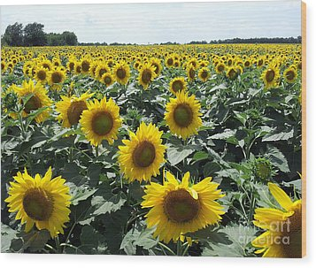 Wood Print featuring the photograph Sunflowers by Cheryl McClure