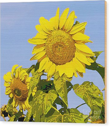 Sunflowers In Morning Wood Print by Artist and Photographer Laura Wrede