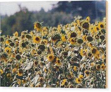 Wood Print featuring the photograph Sunflowers by Maureen E Ritter