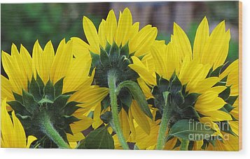 Wood Print featuring the photograph Sunflowers  by Michele Penner