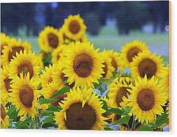 Sunflowers Wood Print by Paul Ward