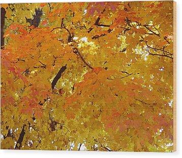Sunkissed 3 Wood Print by Elizabeth Sullivan