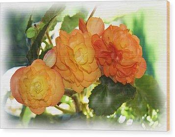 Sunkissed Begonia Trio Wood Print