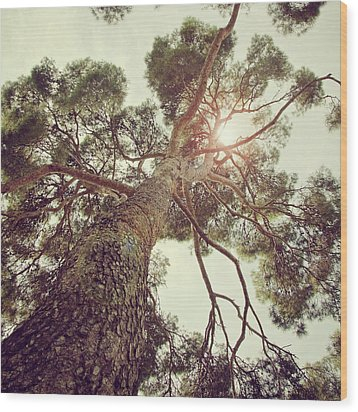 Sunlight Passing Through Branches Of Tree Wood Print by Sbk_20d Pictures