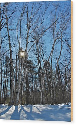 Sunlight Through Birches Wood Print by Mary McAvoy