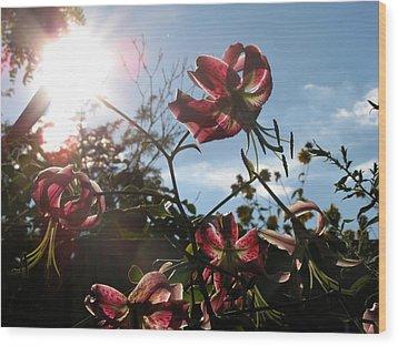 Sunlight Through Flowers Wood Print